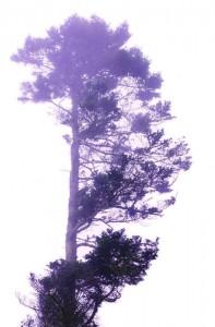 ghosttree-197x300
